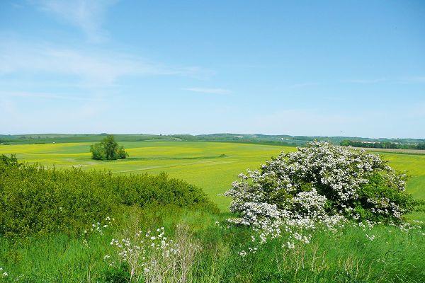 Landschaft Rügen