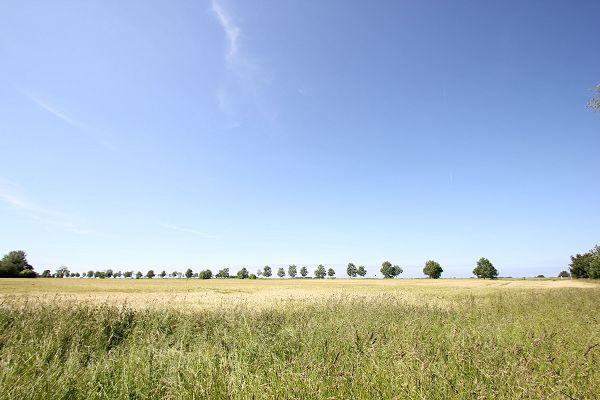 Feld auf Rügen