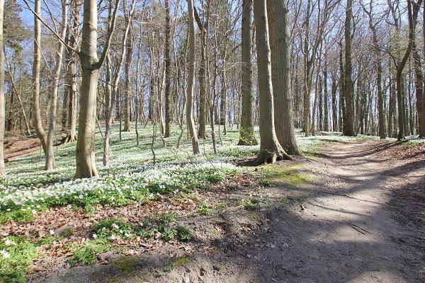 Frühjahr in den Wäldern von Rügen