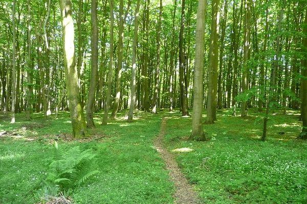 Wälder auf der Insel Rügen