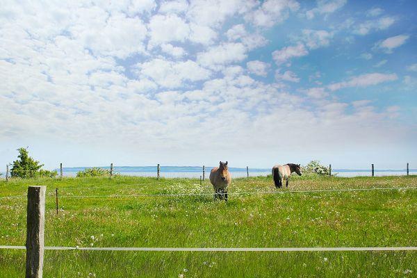 Weide mit Pferden auf Wittow
