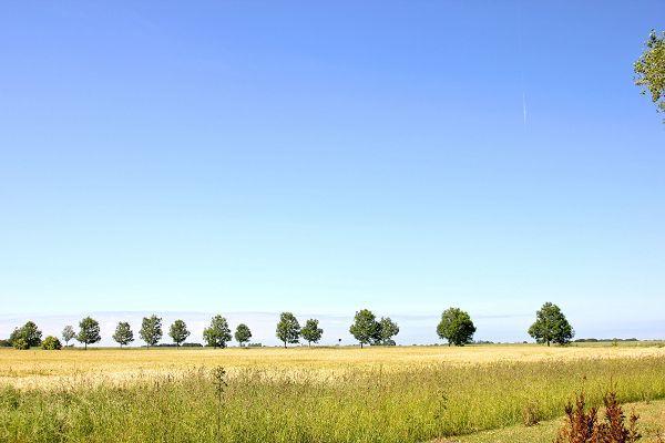 Kornfelder auf der Insel Rügen