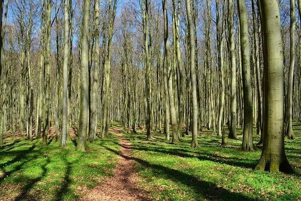 Wald auf Rügen