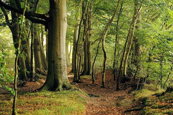 Wald auf der Insel Vilm
