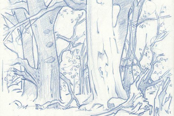 Zeichnung Insel Vilm
